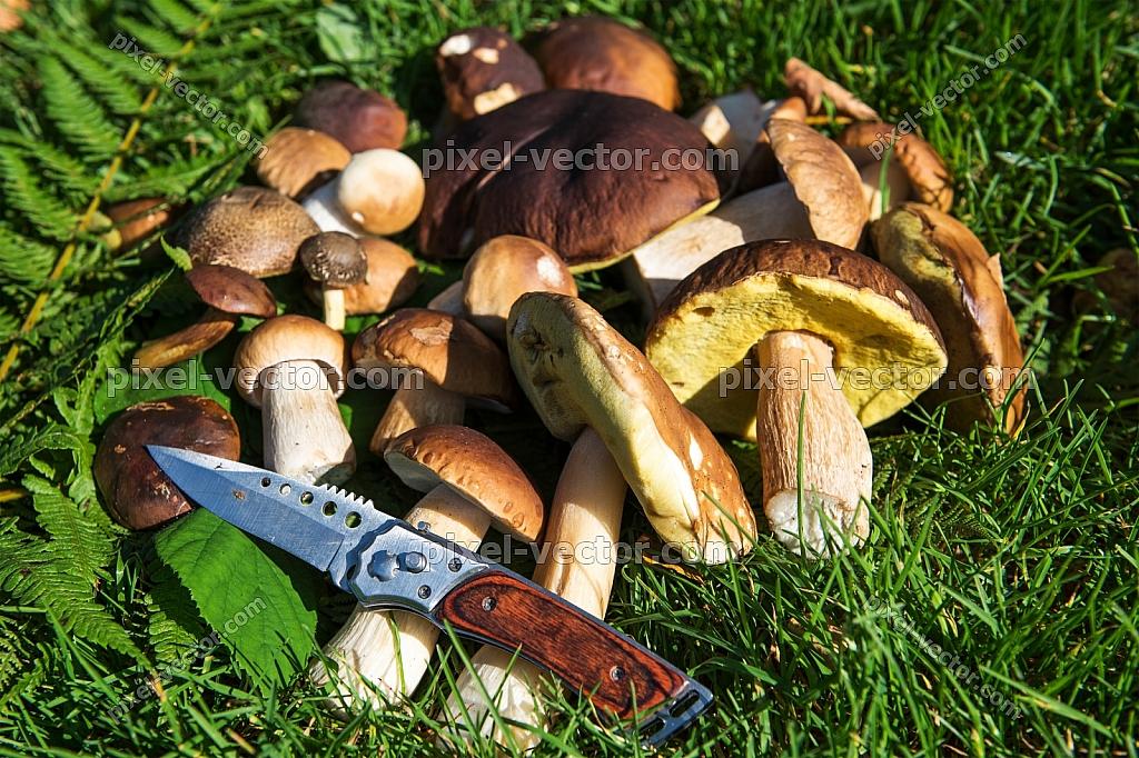 mushroom knife herbs